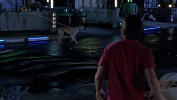 cachorro-e-hopmbre