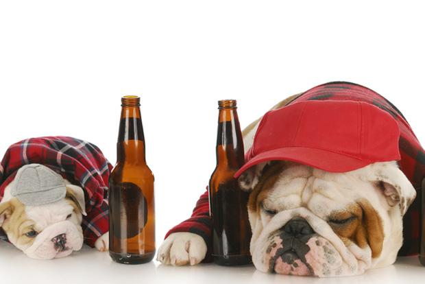 cerveja dia dos pais