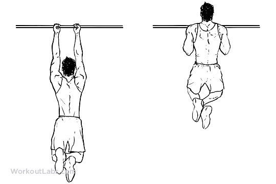 close_grip_pullup_chinup_m_workoutlabs-2