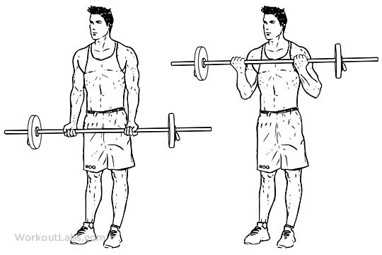 bíceps melhores exercícios