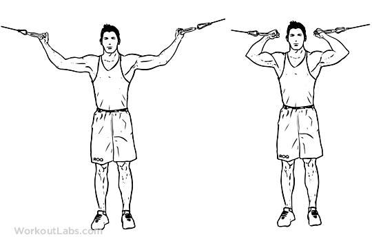 rosca-double-biceps