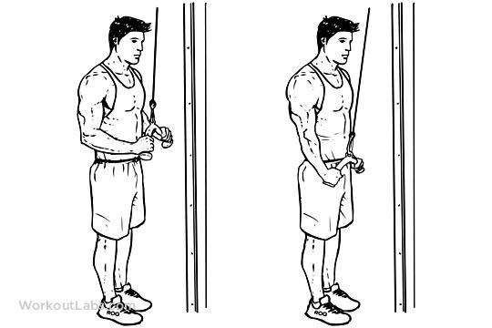 tríceps exercícios treino